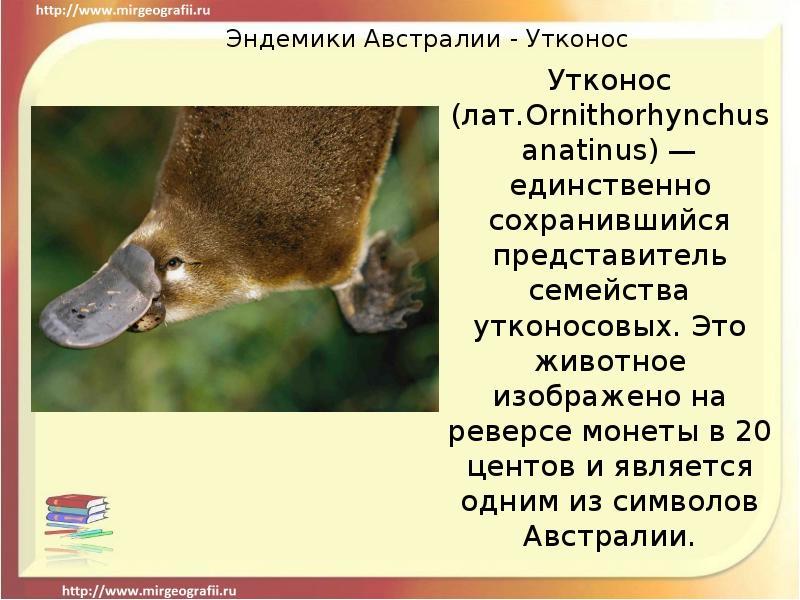 Эндемики - это что? эндемики россии
