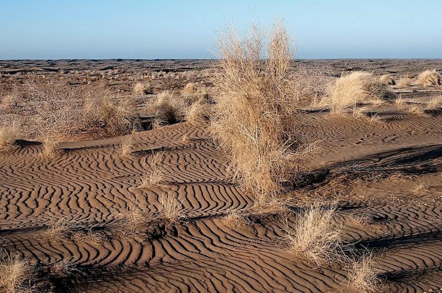 Опустынивание — википедия