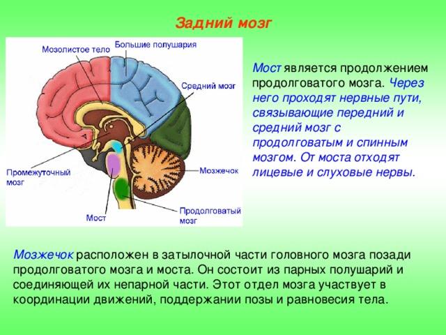 Характерные симптомы поражения мозжечка. причины, признаки, диагностика и лечение мозжечковых нарушений