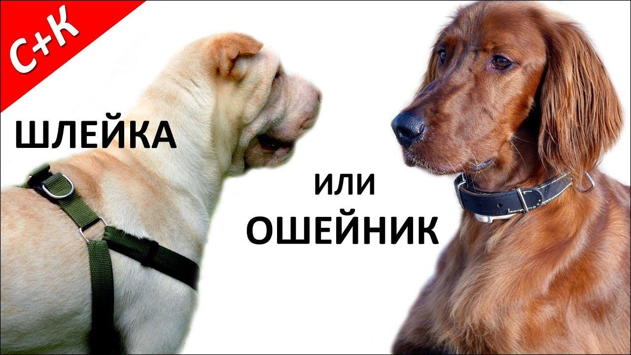 Рекомендации по выбору оптимальной шлейки для собачки: подбор размера