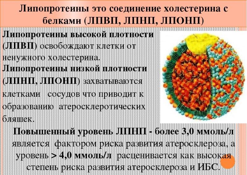 Липопротеины (липопротеиды) высокой и низкой плотности в крови: что это, норма, повышение
