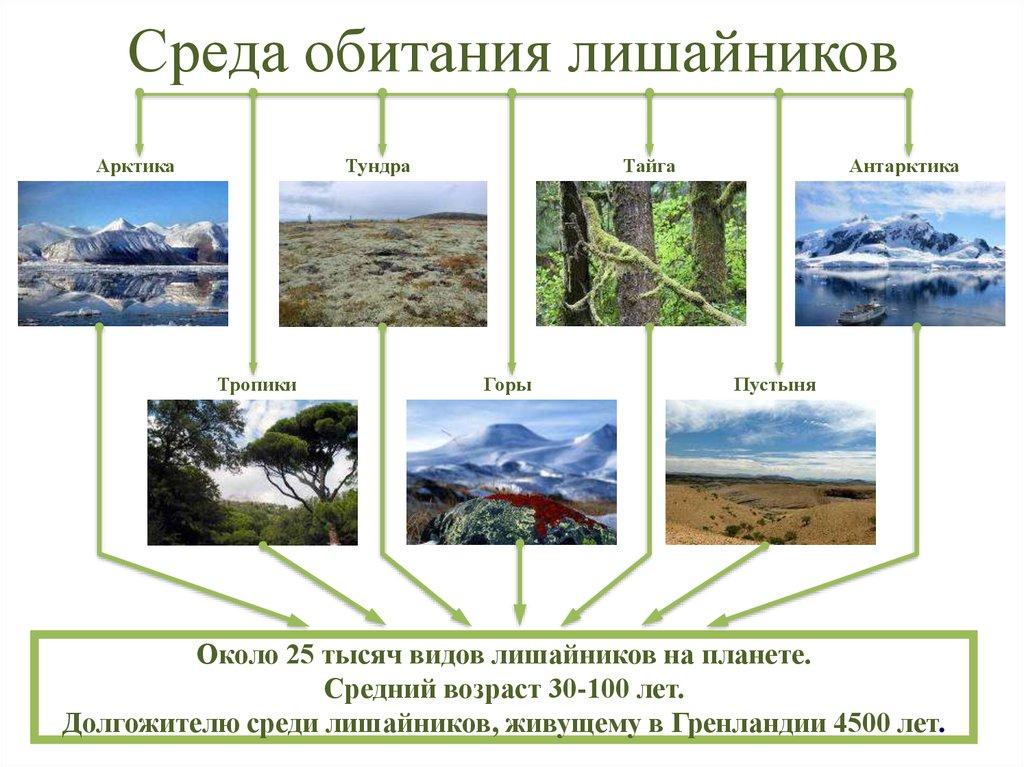 Среда обитания: что это, на что влияет, разнообразие, фото и видео  - «как и почему»