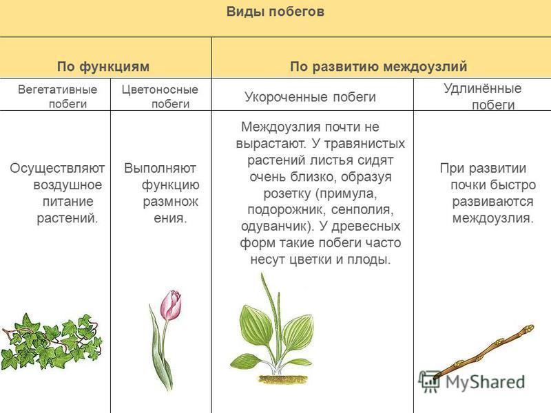 Что такое почка у растений? определение, виды, функции :: syl.ru