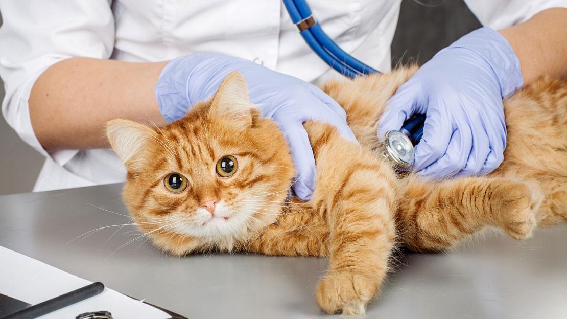 Всё, что нужно знать про стерилизацию кошек - лайфхакер