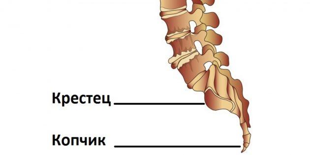Боль в копчике. причины, симптомы, виды, лечение и реабилитация :: polismed.com