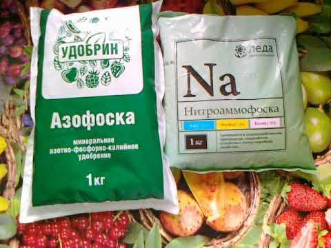 Нитроаммофоска: состав удобрения, инструкция по применению на огороде