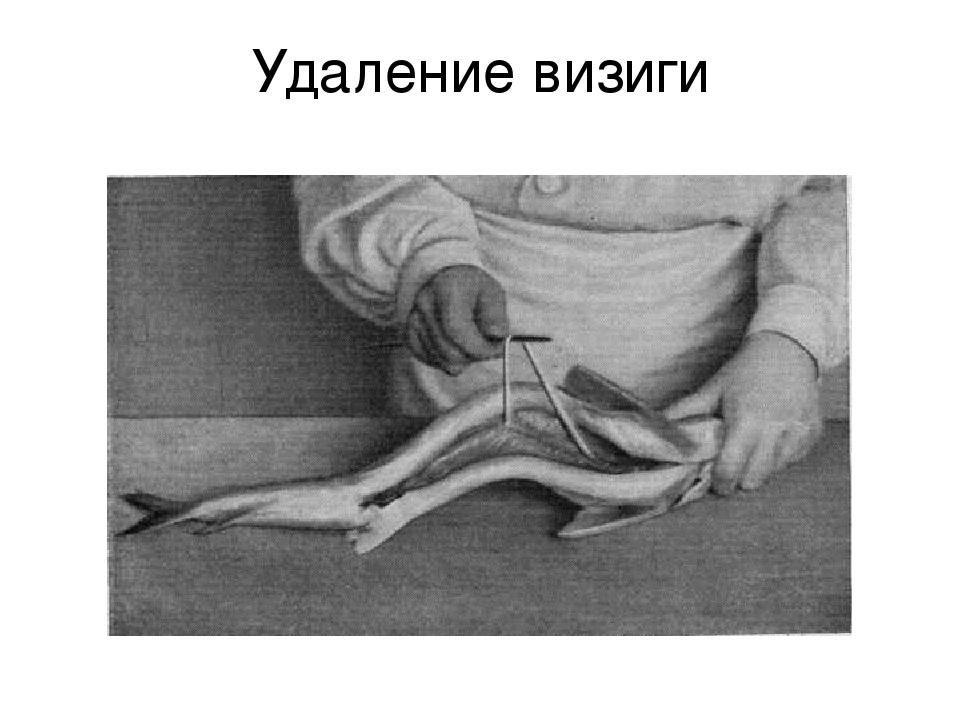 Визига