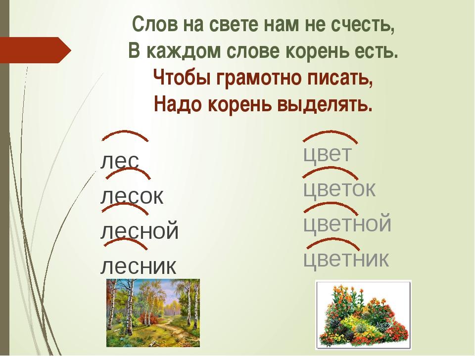 Что такое корень слова: определение, примеры, правила :: syl.ru