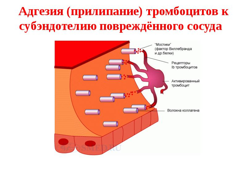 Адгезия асфальтобетона – selena