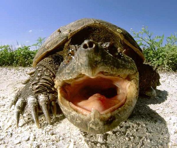 Список пресмыкающихся животных: описание и образ жизни
