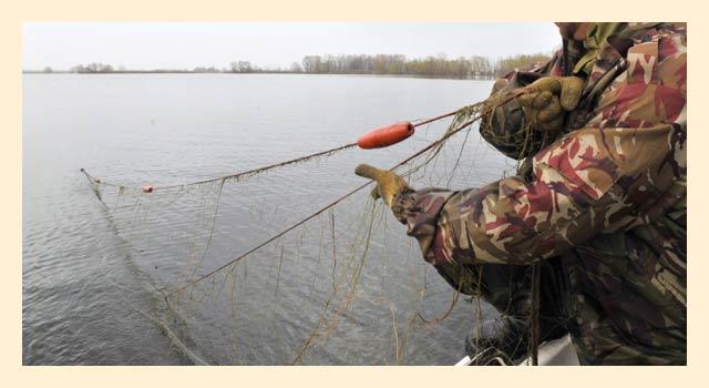 Лицензия на ловлю рыбы сетями: цена и способ получения - рыбалка
