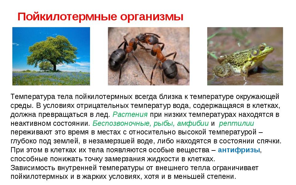 3.1.5. экологические выгоды пойкилотермии и гомойотермии. общая экология