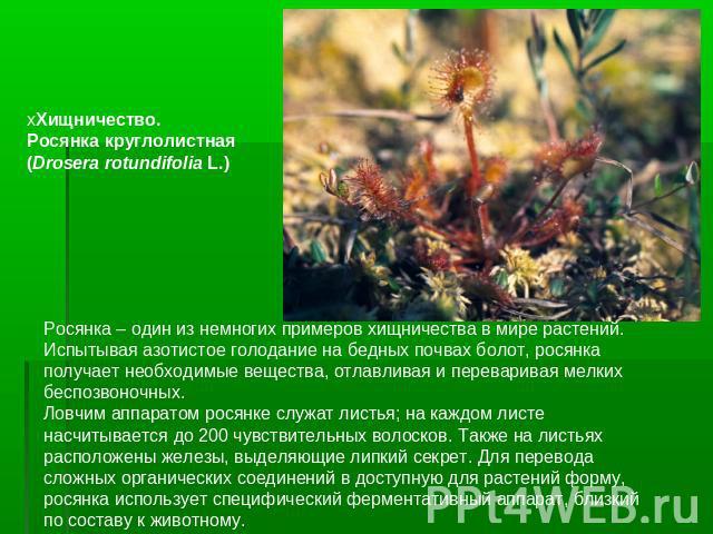 Типы отношений между организмами - примеры, краткое описание и таблица — природа мира