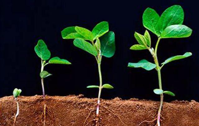Опрыскивание в период вегетации это когда и что это значит?