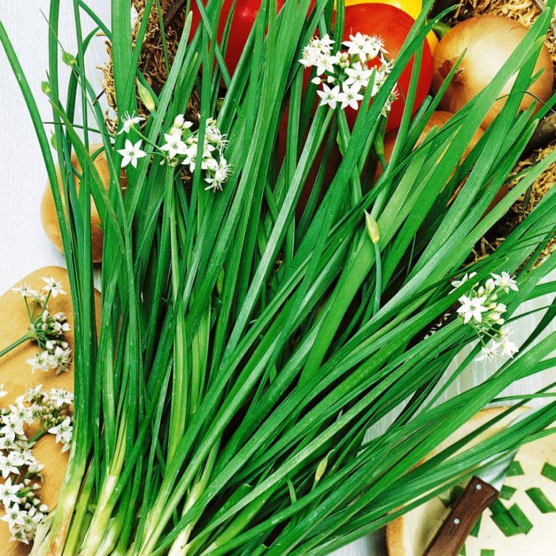 Лук душистый (джусай), область применения, полезные свойства и рецепты вкусных блюд