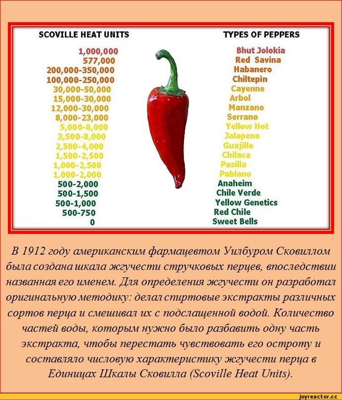 Кайенский перец описание, польза, вред и целебные свойства