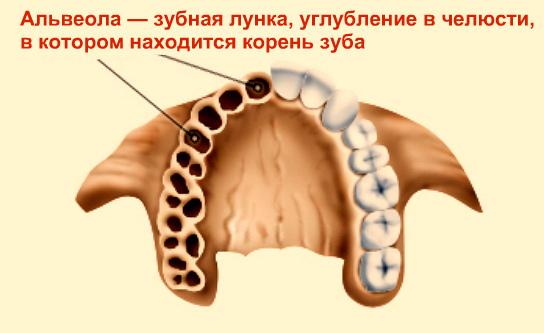 Альвеолит легких: причины, симптомы, диагностика и методы лечения - sammedic.ru