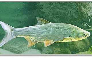 Рыбы: характер знака, мужчины и женщины, здоровье, совместимость