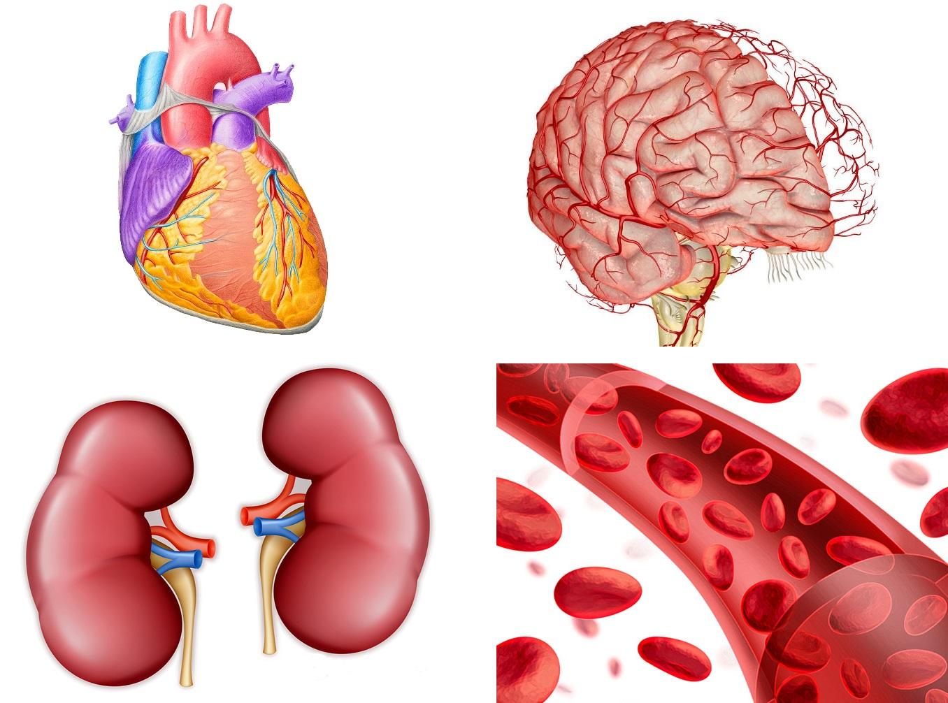 Эссенциальная и реноваскулярная артериальная гипертензия | лечение сердца