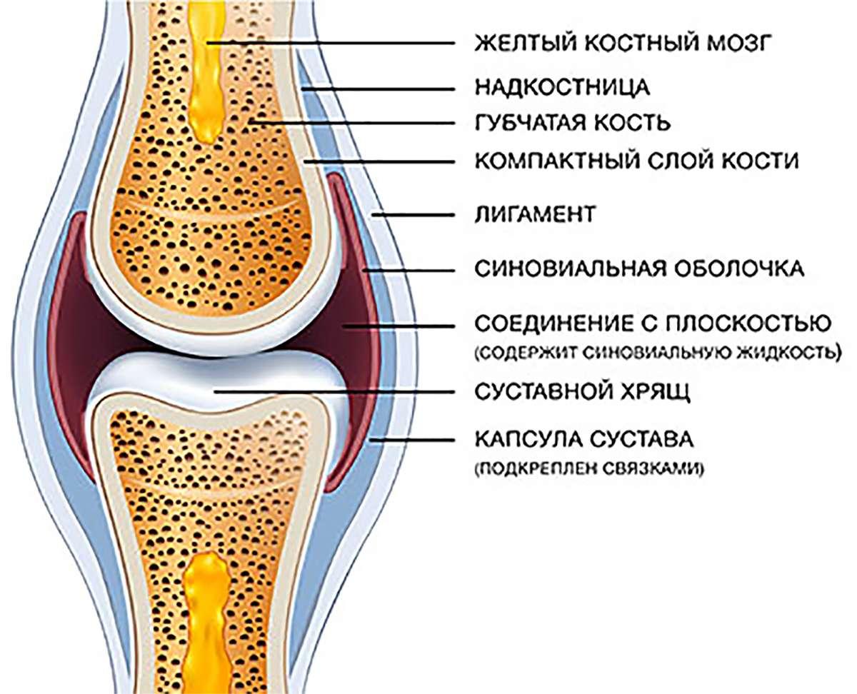 Синовиальная жидкость что это такое - все про связки и суставы