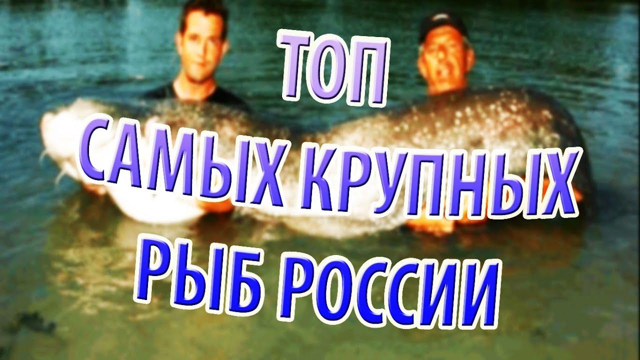Рыба знак зодиака: характеристика, описание, гороскоп, месяц рыб