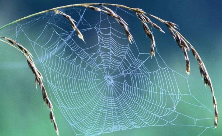 Технология использования паутины в медицине