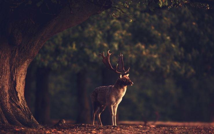 Виды оленей – аграрий