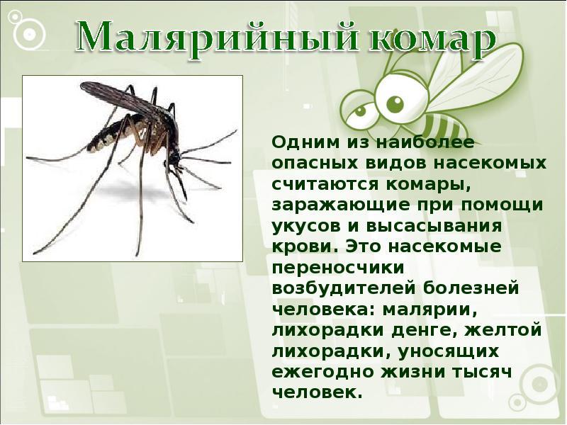 Комар обыкновенный