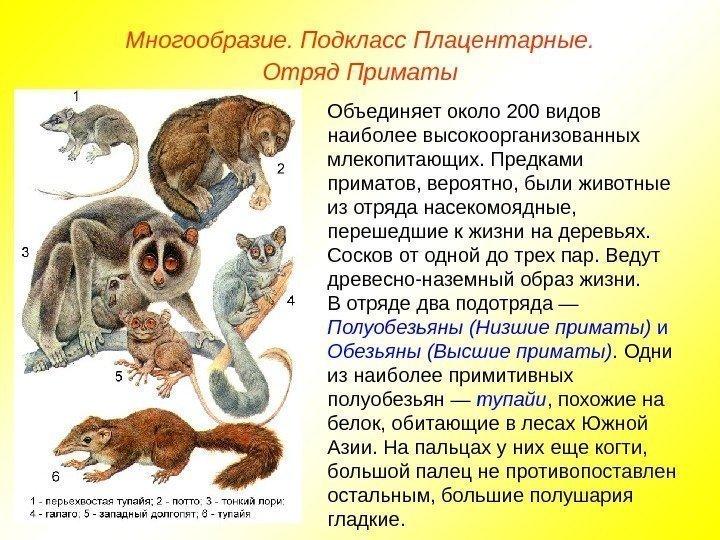 Список и описание основных отрядов класса млекопитающие