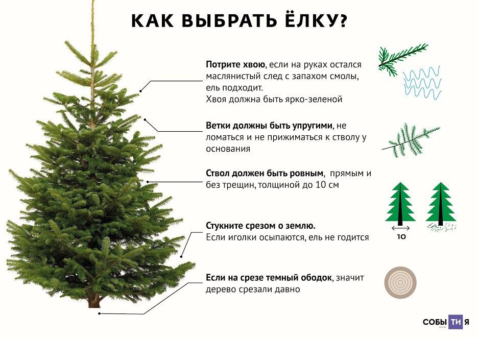 Значение слова «елей» в 10 онлайн словарях даль, ожегов, ефремова и др. - glosum.ru