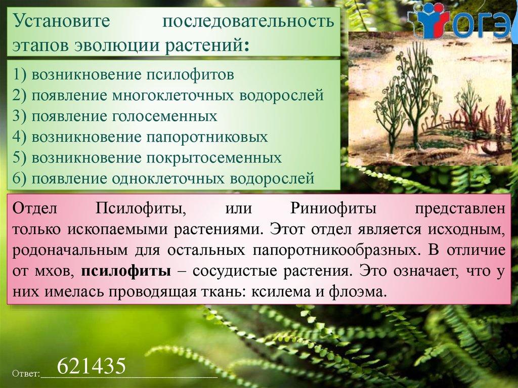 Псилофиты - это первые покорители суши древней земли