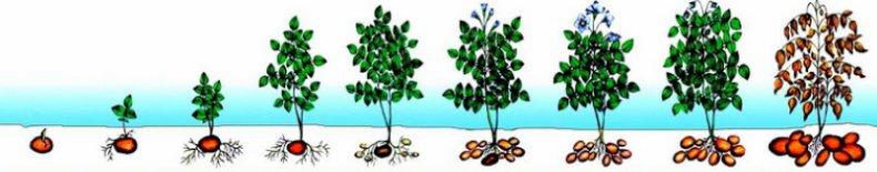 Обработка смородины весной от вредителей и болезней: сроки, препараты, отзывы