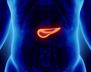 Жизненно необходимые 70 граммов: зачем нужна поджелудочная железа, где она находится и можно ли без неё жить человеку