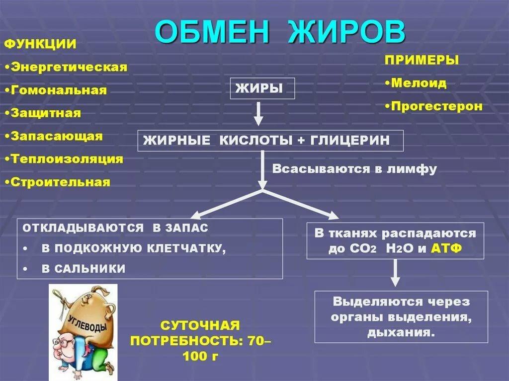 Липиды, жиры и липоиды. функции липидов • биология-в.рф