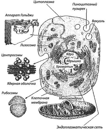 Мембрана в одежде: что это такое, каковы свойства и состав мембранной ткани, как ухаживать за материалом?
