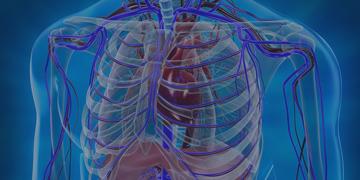 Тимома: что это такое, симптомы опухоли вилочковой железы