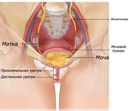 """""""уретриты у женщин: особенности течения, клиника, диагностика и лечение"""""""