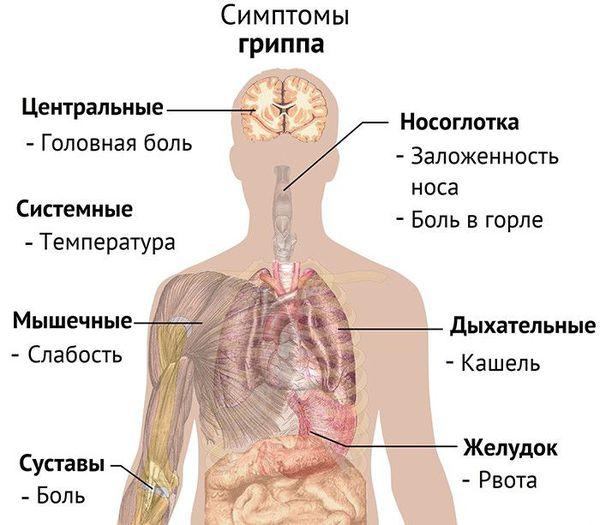Орз у взрослых: стадии, симптомы и лечение