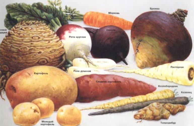 Корнеплоды, какие растения к ним относятся