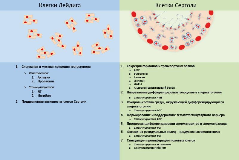 Окситоцин и вазопрессин – социальные гормоны. стой, кто ведет? [биология поведения человека и других зверей]
