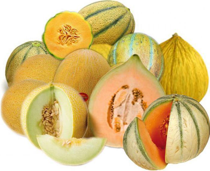 Плоды дыни — фрукты, ягоды или овощи, как они растут и в чем польза и вред этого растения для организма человека?