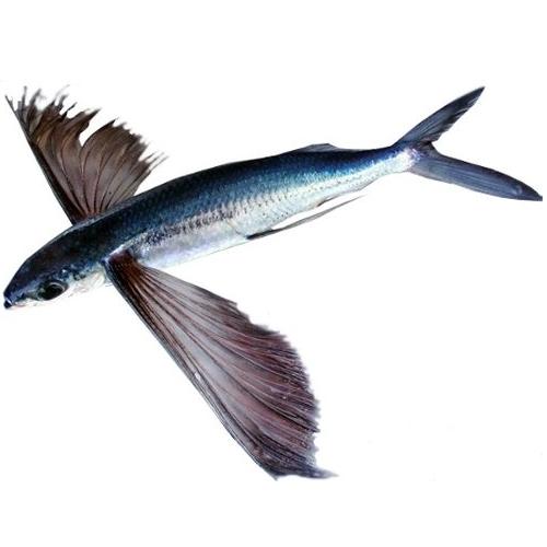 Икра летучей рыбы «тобико»