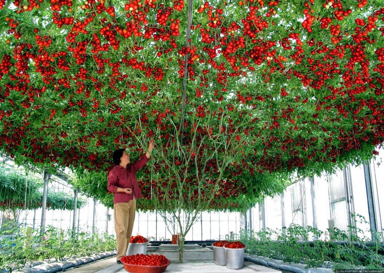 Что такое период вегетации у растений