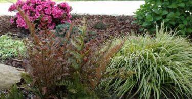 Осока: где растет трава, которой легко порезаться