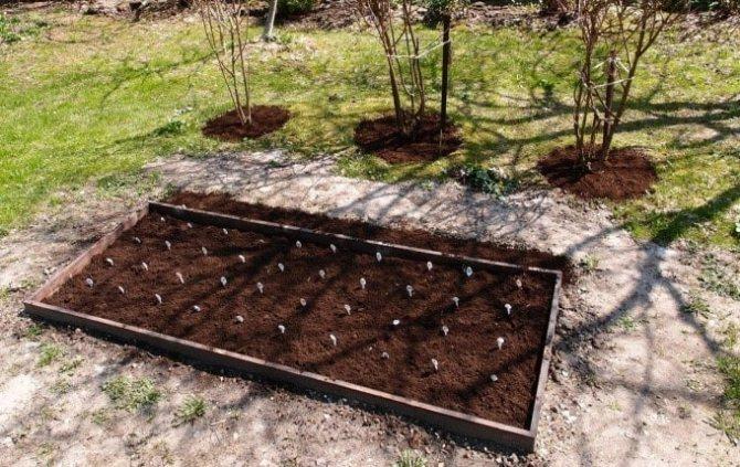 Торфяная почва: что делать с торфяной землей на участке? характеристика торфяно-глеевых и других видов почв. это плохо или хорошо? что растет на торфяной почве?