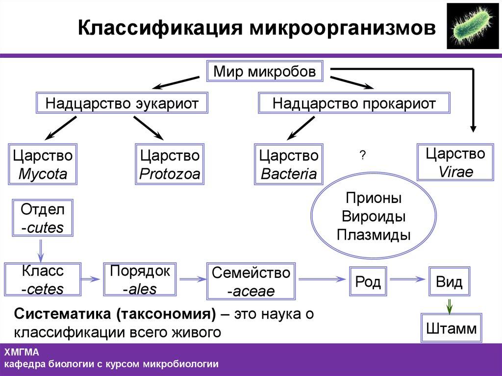 Микробы - это что такое? классификация микроорганизмов