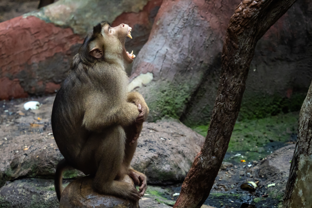 Виды обезьян: фото, видео, названия, особенности, описание, питание и размножение  - «как и почему»