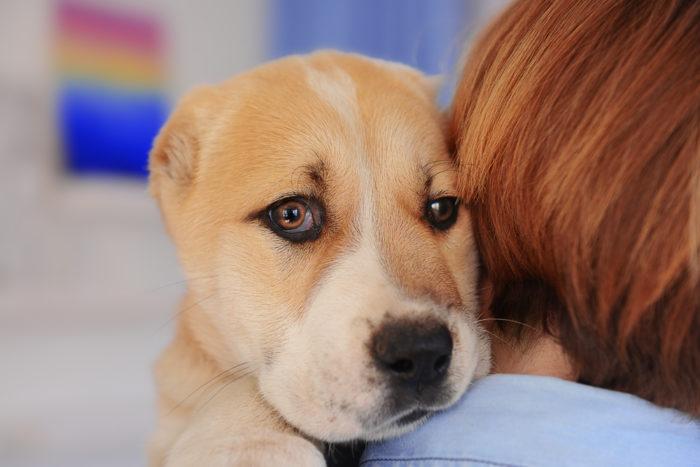 Сколько длится течка у собак и поведение собаки во время и после течки