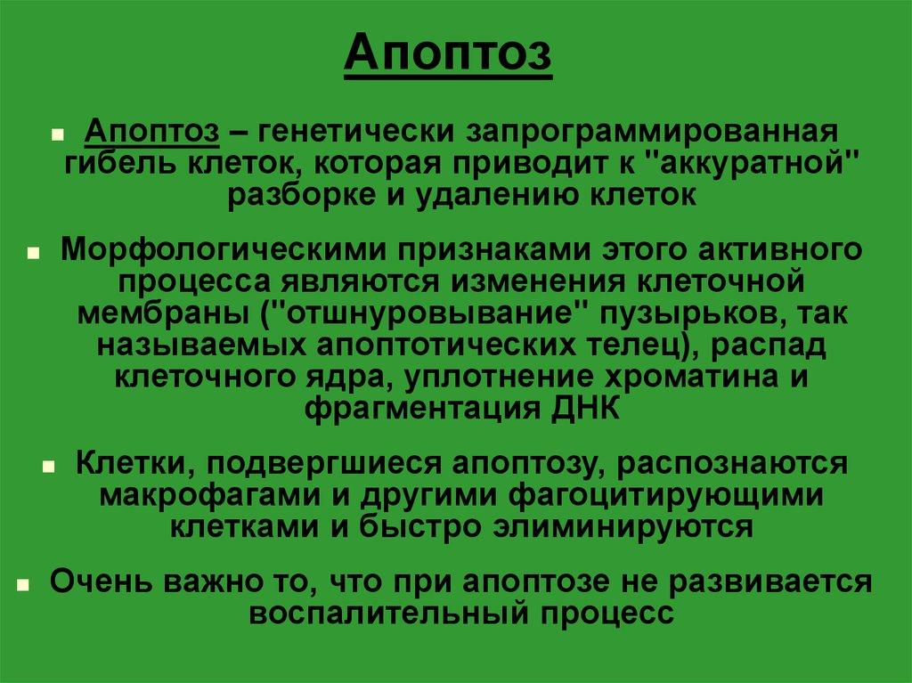 Апоптоз. определение. стадии апоптоза. - alexmed.info