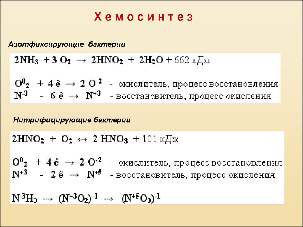 Роль хемосинтезирующих бактерий на земле